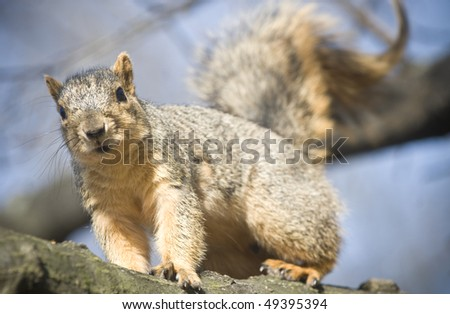 Squirrel up on a tree