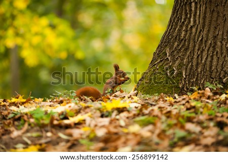 Squirrel with a nut in the park - stock photo
