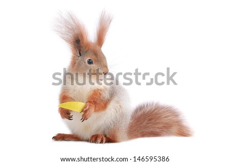 squirrel with apple on a white background - stock photo