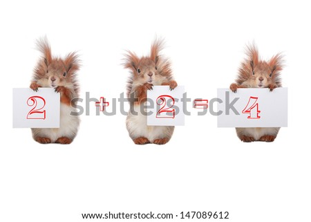 squirrel with figures on a white background - stock photo