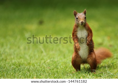 Squirrels say hallo - stock photo