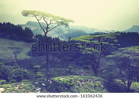 Sri Lanka - stock photo
