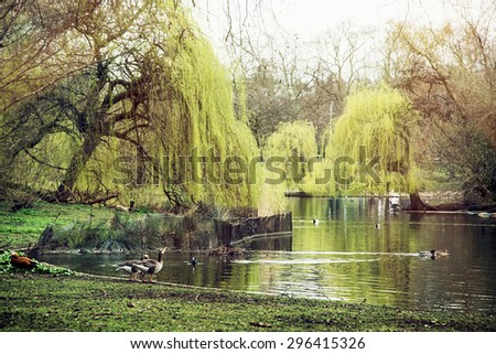St. james's park scene. Beautiful trees, waterfowl and lake. London, Great Britain. - stock photo