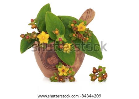 St Johns Wort herb with leaf and flower sprigs in an olive wood mortar with pestle and loose isolated over white background. Hypericum. Alternative remedy for depression. - stock photo