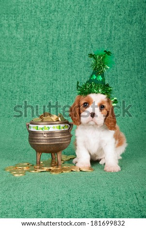 St Patrick Day Cavalier King Charles puppy with green sparkle hat, black pot filled with toy gold coins on green background
