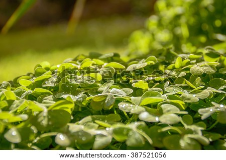 ST Patrick's Day background. Artistic abstract blur shamrock clover leaves. - stock photo