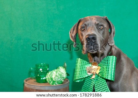 St. Patrick's Day Great Dane - stock photo