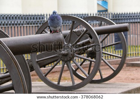 St. Petersburg, Russia - February 14, 2016: Pigeon sitting on the barrel of the Turkish cannon, which is part of the Monument of Glory near the Trinity Cathedral.