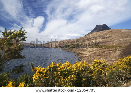 Stac Pollaidh above Loch Lugainn with gorse bush in foreground