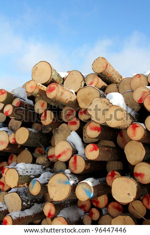 Stack of cut softwood logs with blue sky and few clouds on the background. - stock photo