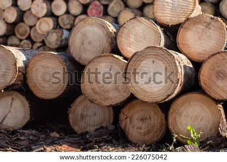 Stack of cut tree logs, selective focus. - stock photo