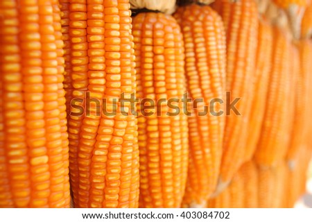 Stack of dry corn - stock photo