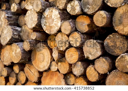 Stack of forestry felled pine tree trunks left to season over winter, photographed in warm evening autumn sun. - stock photo