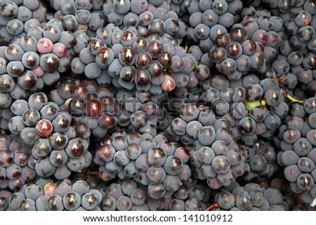 Stack of fresh black grapes - stock photo