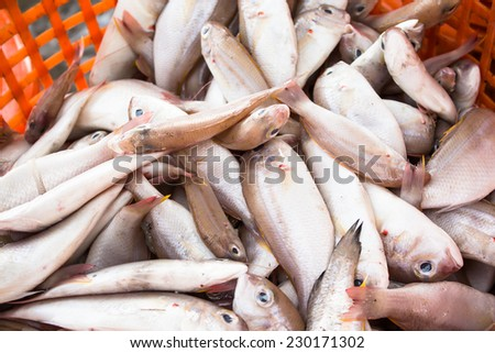 stack of fresh fish in basket sold in fish dock market - stock photo