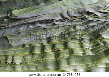 Stack of leave banana. - stock photo
