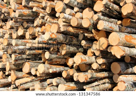 Stack of small logs of different species of trees, mostly birch. - stock photo