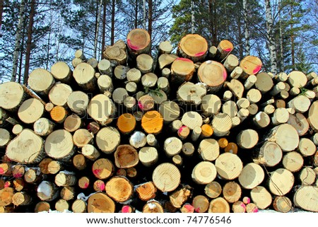 Stacked Deciduous Wood in Forest, Horizontal View - stock photo