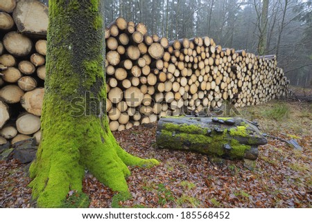 Stacked logs in a forest - stock photo