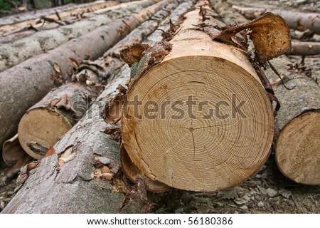 Stacked timber logs - stock photo