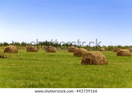 Stacks in the field - stock photo