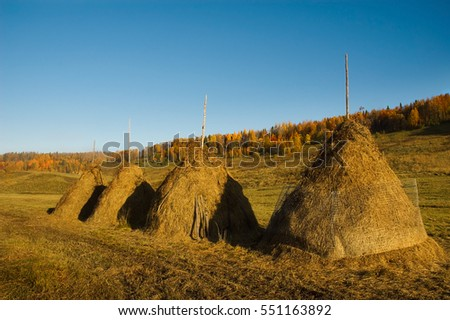 Stacks of hay. Beautiful fall landscape.