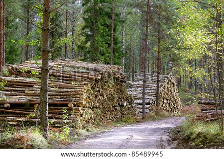 Stacks of wood fuel and birch logs by forest logging road. - stock photo