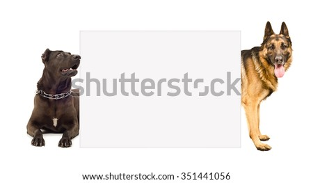 Staffordshire terrier and  German shepherd peeking from behind banner, isolated on white background - stock photo