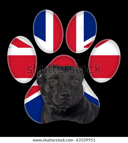 Staffordshire Terrier, Dog portrait with a background of Britain flag in paw print - stock photo