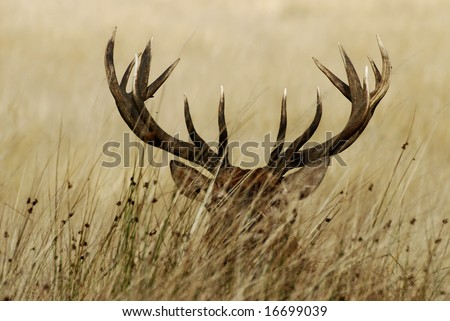 Stag - stock photo