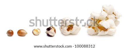 stages of preparation of popcorn. grains of corn are isolated on a white background - stock photo