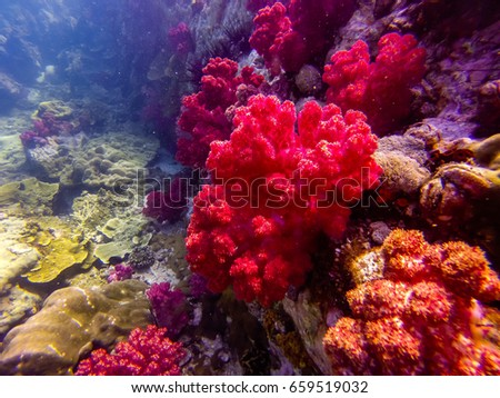 staghorn coral on rock underwater, Underwater coral reef