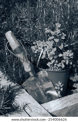 stainless steel garden trowel in a herb garden in Ireland toned - stock photo