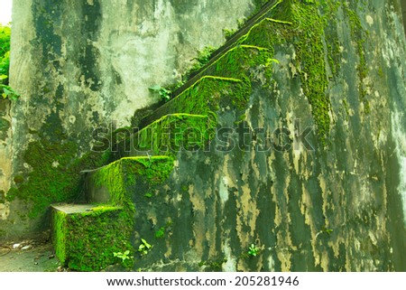 staircase covered in moss and surrounded - stock photo
