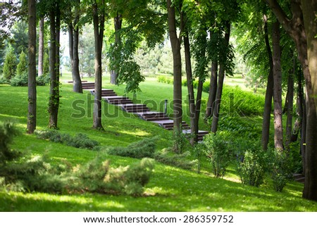 Stairs grass trees forest park nature herbs shrubs