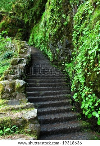 Stairs on lush, green trail - stock photo