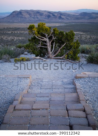 Stairs to Old Tree - stock photo