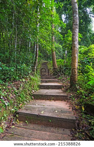 Stairway to jungle, national park, Chiang mai,Thailand