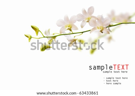 Stalk of white dendrobium orchid isolated on white background - stock photo