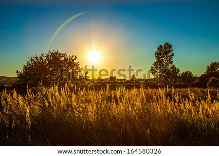 Stalks silhouetted against the sky at the sunset. - stock photo