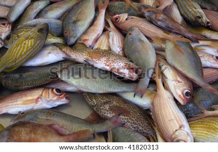 stall of fishes at the market