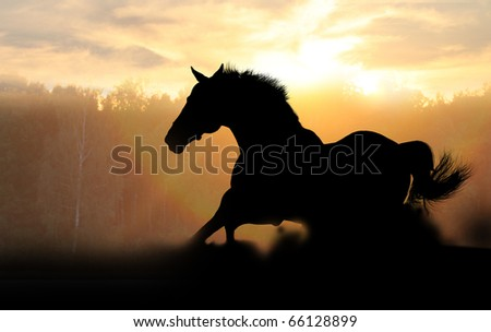 stallion in sunset - stock photo