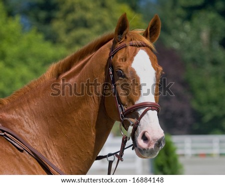 stallion posing for a head shot - stock photo