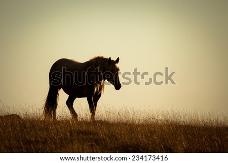 Stallion silhouette in a prairie in the sunset light - stock photo