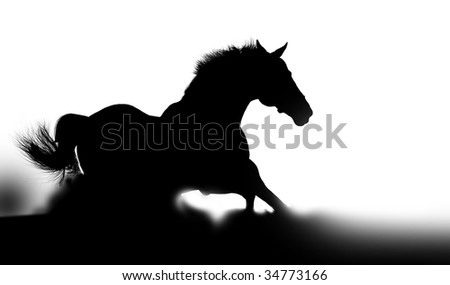 stallion silhouette in dust - stock photo
