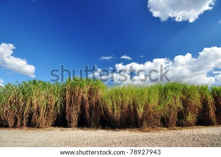 Stand of perennial grasses - stock photo