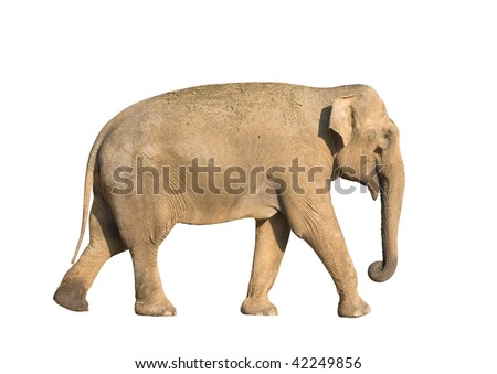 Standing brown elephant isolated over white background - stock photo