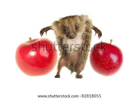 Standing hedgehog on a white background - stock photo