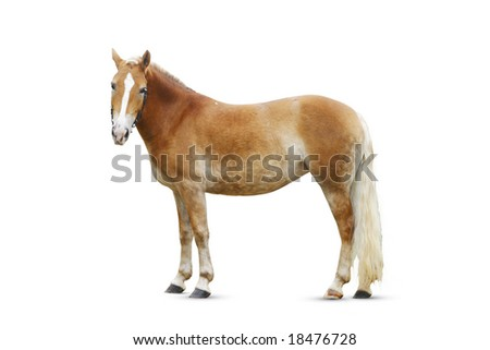 standing palomino horse isolated on white