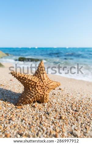 Standing starfish at the beach - stock photo